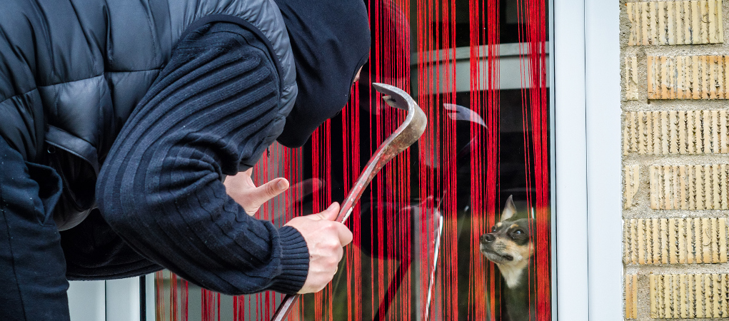 Legittima-difesa-per-furto-di-cani